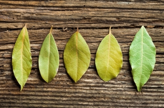 five_bayLeaves_istock
